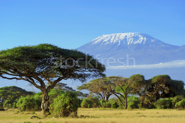 Kilimanjaro Stock photo © byrdyak