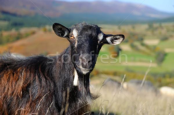 коза горные никто небе Сток-фото © byrdyak