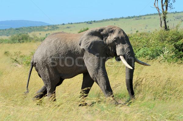 Elefante parque Kenia familia bebé Foto stock © byrdyak