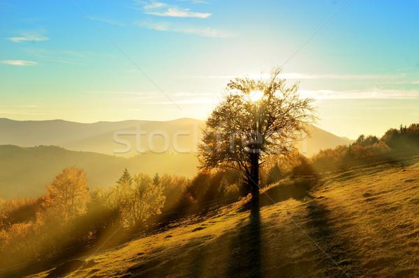 Sonbahar manzara dağ renkli orman ağaç Stok fotoğraf © byrdyak
