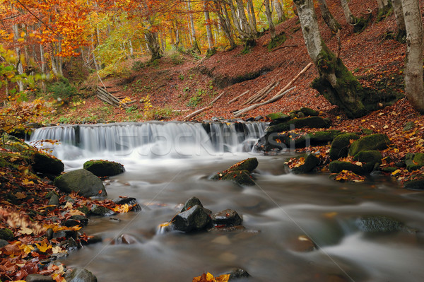 осень лес водопада пород желтый листьев Сток-фото © byrdyak
