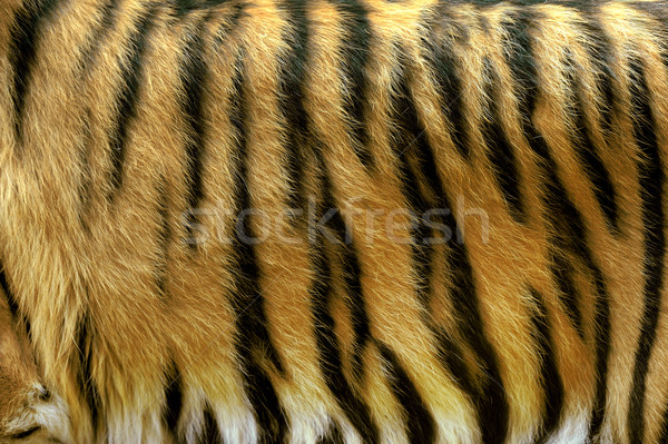 Texture of real tiger skin Stock photo © byrdyak