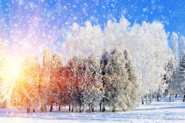 Winter park sneeuw bos natuur Stockfoto © byrdyak