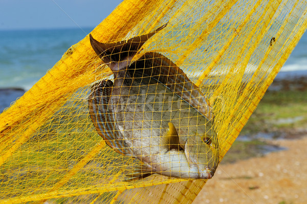 Fish in a fishing nets Stock photo © byrdyak