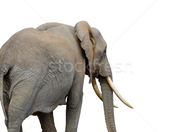 Elefante branco isolado bebê fundo mãe Foto stock © byrdyak