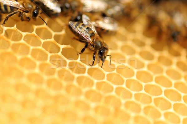 Foto d'archivio: View · lavoro · api · oro · ape