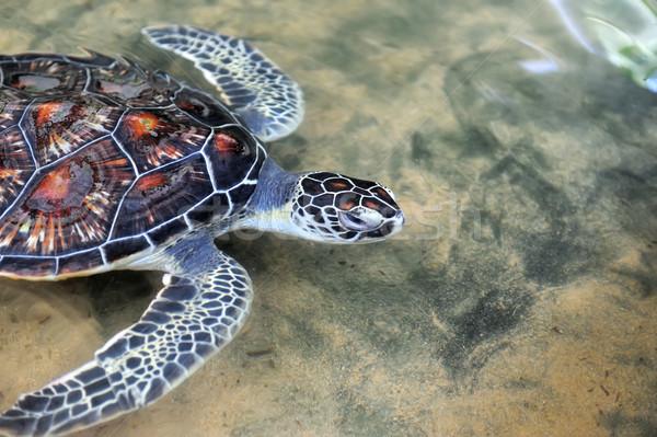 Teknős vad sziget Sri Lanka természet tenger Stock fotó © byrdyak