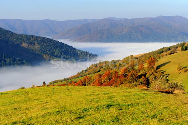 лес горные склон осень небе Сток-фото © byrdyak