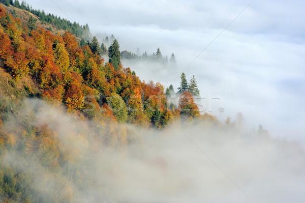 Orman dağ sonbahar ağaç Stok fotoğraf © byrdyak