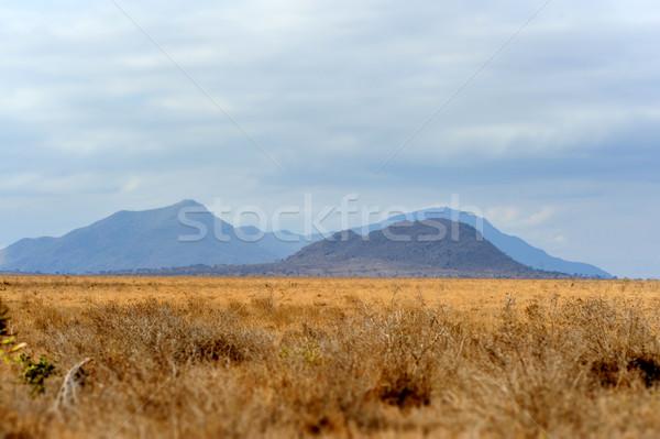 Manzara park Kenya Afrika ağaç yol Stok fotoğraf © byrdyak