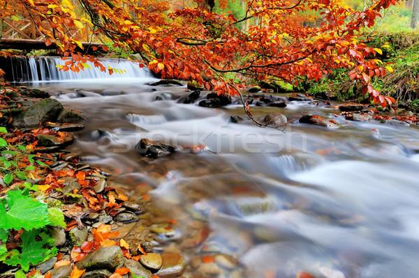 Sonbahar orman çağlayan kayalar sarı yaprakları Stok fotoğraf © byrdyak