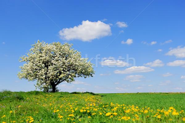Ağaç bahar kırsal çayır gökyüzü Stok fotoğraf © byrdyak