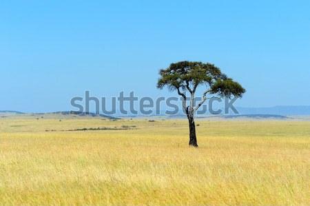 Sabana paisaje parque Kenia cielo árbol Foto stock © byrdyak