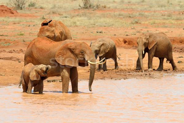 éléphant lac parc Kenya Afrique eau Photo stock © byrdyak