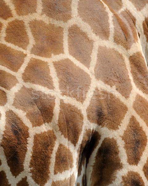 Giraffe bruin huid textuur gezicht Stockfoto © byrdyak