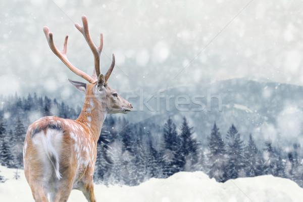 Cerfs hiver grand Homme montagne design Photo stock © byrdyak