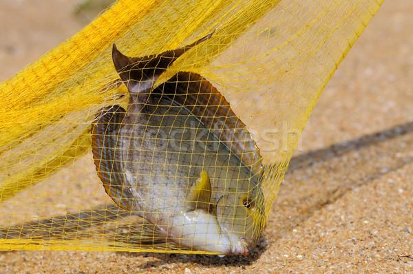 Balık balık tutma büyük sarı el çalışmak Stok fotoğraf © byrdyak