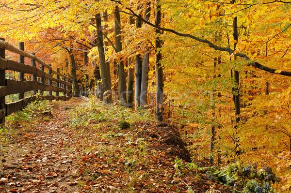 Wide trail cuts through a autumn forest  Stock photo © byrdyak