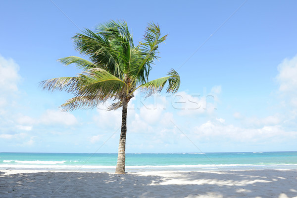 Palm mooie palmbomen strand boom zon Stockfoto © byrdyak