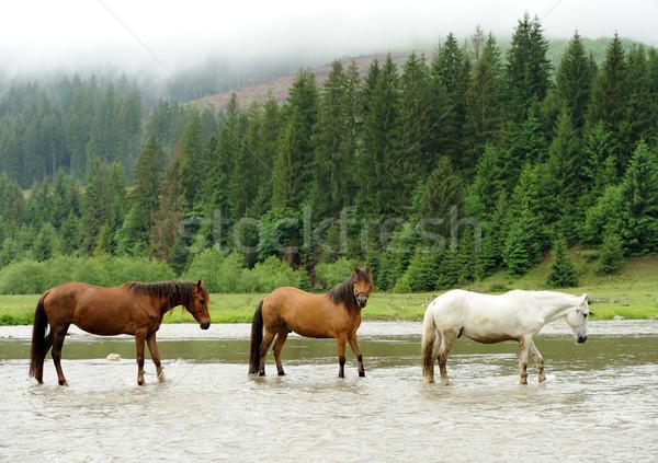 Stock fotó: Ló · folyó · hegyek · fa · erdő · farm