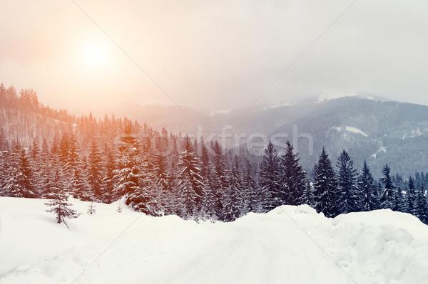 зима пейзаж красивой снега покрытый деревья Сток-фото © byrdyak