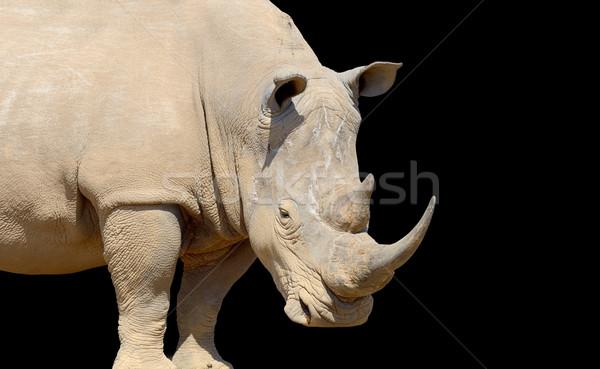 Rhino on dark background Stock photo © byrdyak