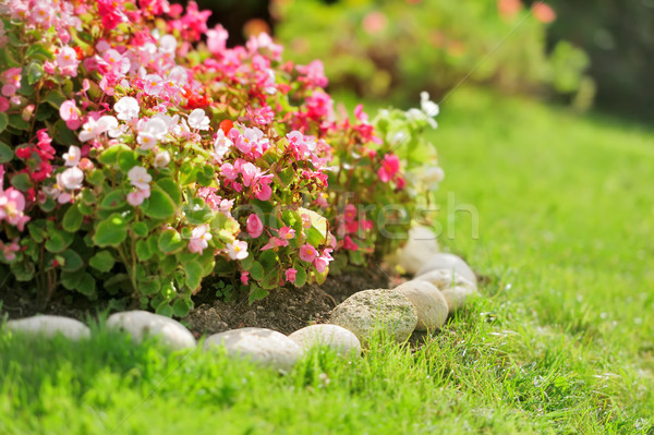 Pretty manicured flower garden with red flowers Stock photo © byrdyak