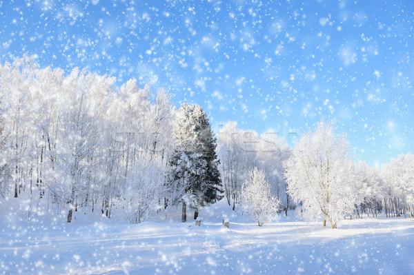 Stok fotoğraf: Kış · park · kar · orman · doğa