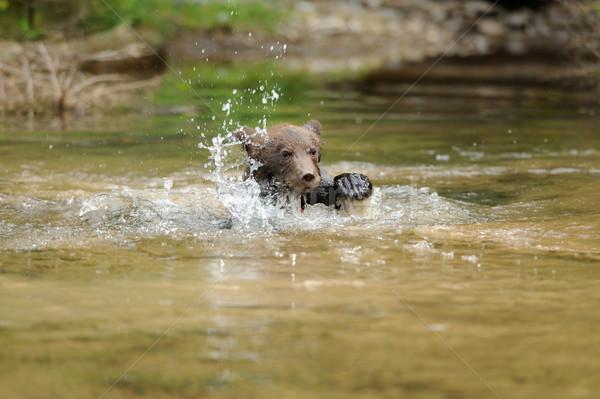 ヒグマ カブ 湖 家族 赤ちゃん 魚 ストックフォト © byrdyak
