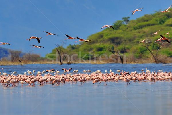 Lago Kenia África superficial agua Foto stock © byrdyak