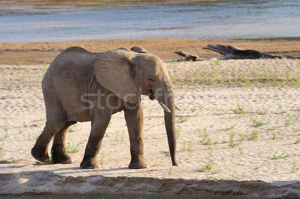 Elefante parco Kenia famiglia texture nero Foto d'archivio © byrdyak