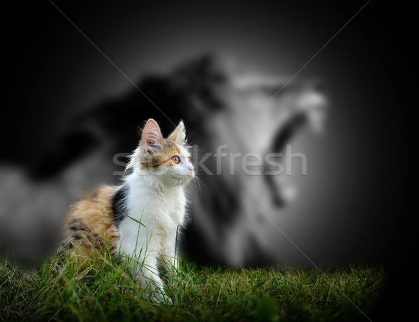 Cat with lion shadow Stock photo © byrdyak