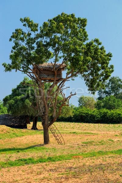 Tree House Stock photo © byrdyak