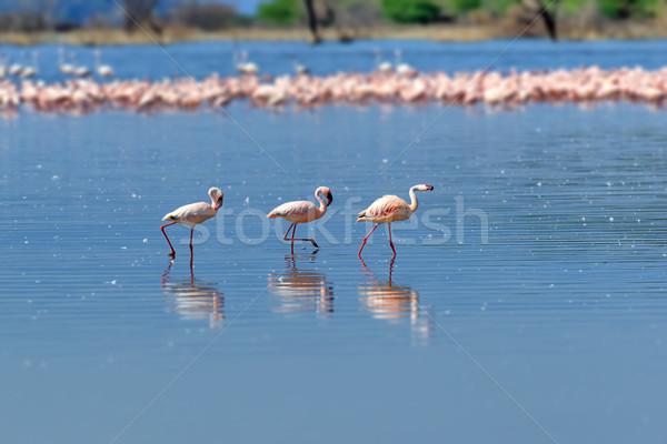 Ondiep natuur schoonheid Blauw groep Stockfoto © byrdyak