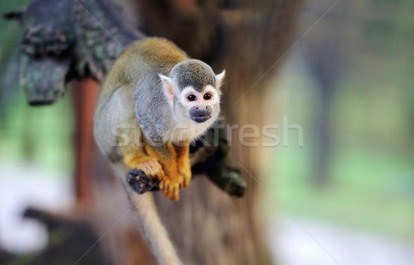 Сток-фото: белку · обезьяны · филиала · ребенка · лес