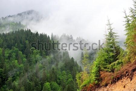 Bella montagna panorama estate giorno cielo Foto d'archivio © byrdyak