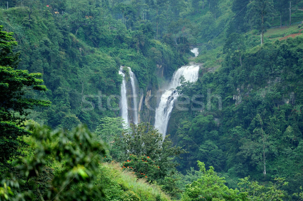 Beautiful waterfall in Sri Lanka Stock photo © byrdyak