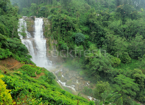 Ramboda falls in Sri Lanka Stock photo © byrdyak