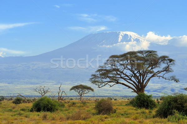 Kilimanjaro Stock photo © byrdyak
