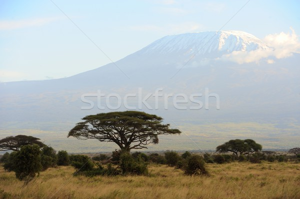 снега Top Гора Килиманджаро природы красоту горные Сток-фото © byrdyak