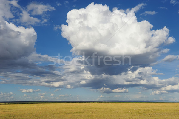 Savane dramatique nuage vaste paysage fond Photo stock © byrdyak