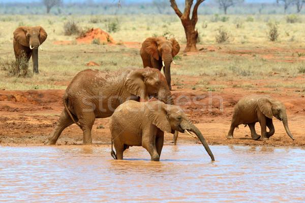 Stock fotó: Elefánt · tó · park · Kenya · Afrika · víz