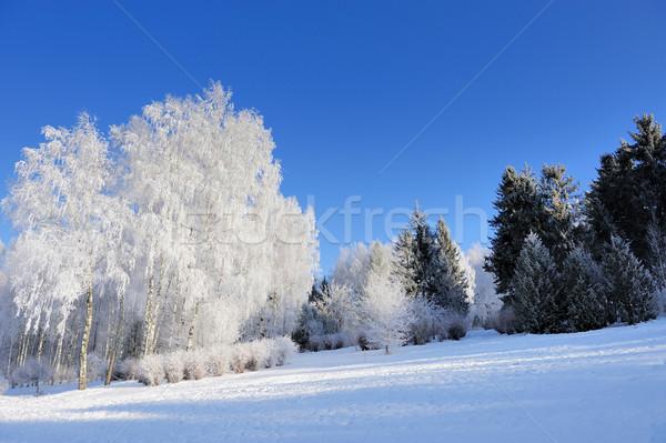 Winter park Stock photo © byrdyak