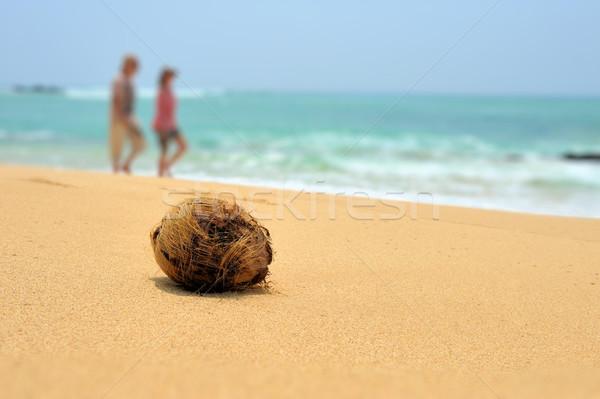 Coconut on tropical beach Stock photo © byrdyak