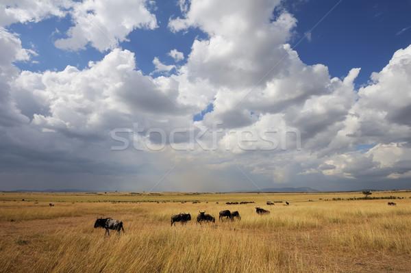 Savanne landschap park Kenia afrika hemel Stockfoto © byrdyak
