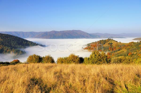 Forêt montagne pente mystique automne ciel Photo stock © byrdyak
