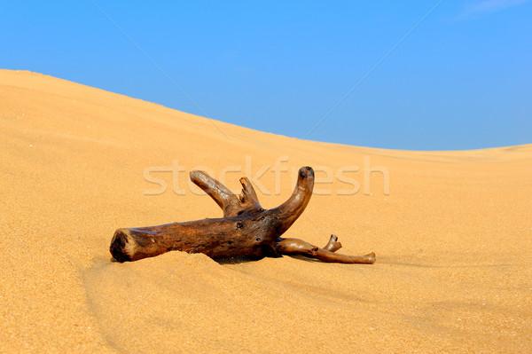 Ramo sabbia spiaggia tropicale albero natura Foto d'archivio © byrdyak