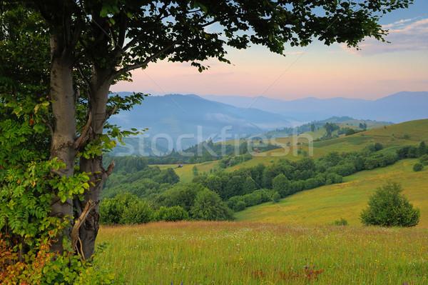 Sunny day in mountain landscape Stock photo © byrdyak