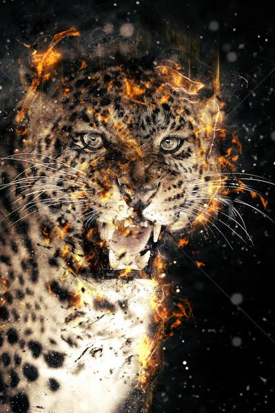 Leopard in fire Stock photo © byrdyak