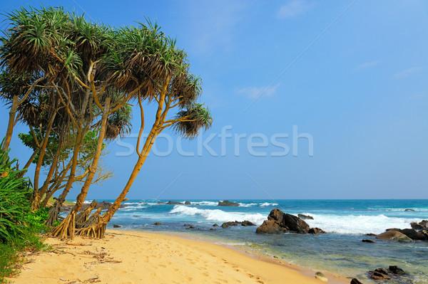 Tropikal plaj palmiye Sri Lanka plaj gökyüzü su Stok fotoğraf © byrdyak